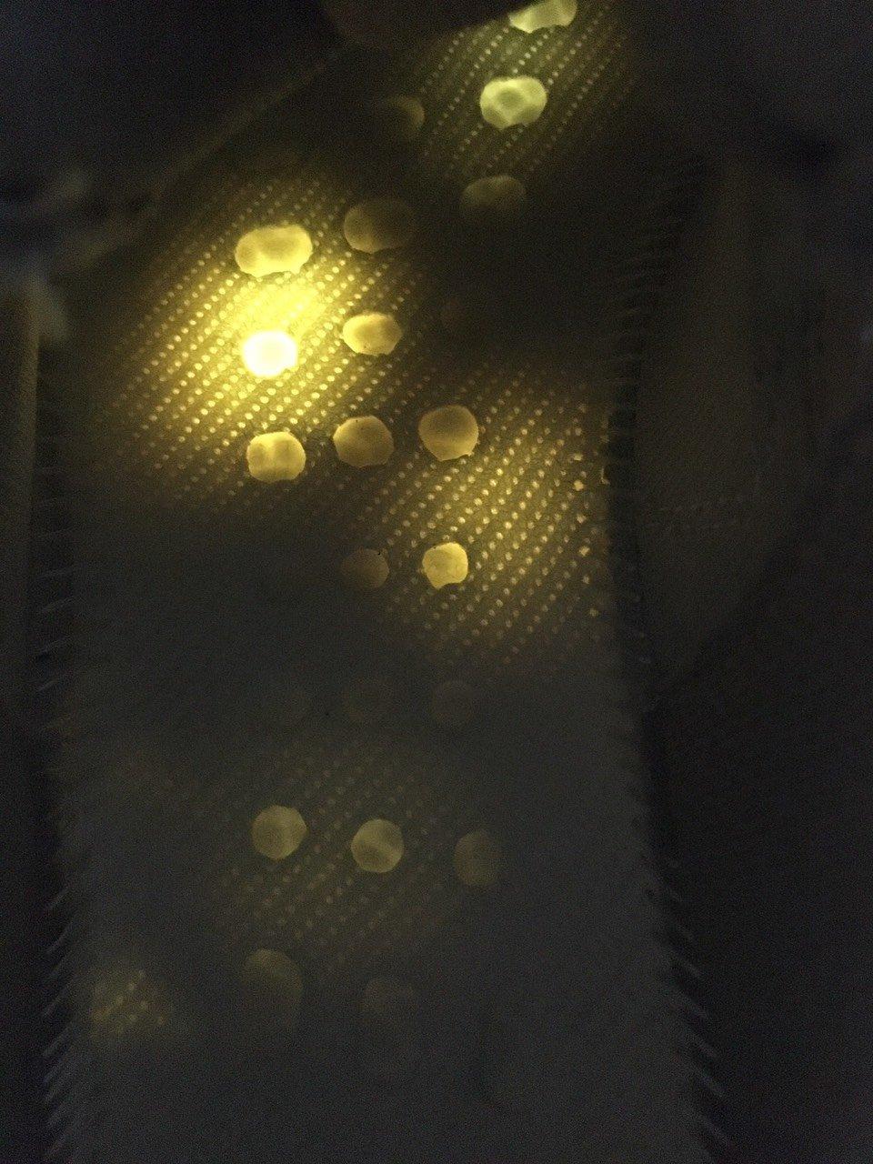 Giày Thể Thao Adidas Yeezy 700 V2 Static Phản Quang ảnh thực tế